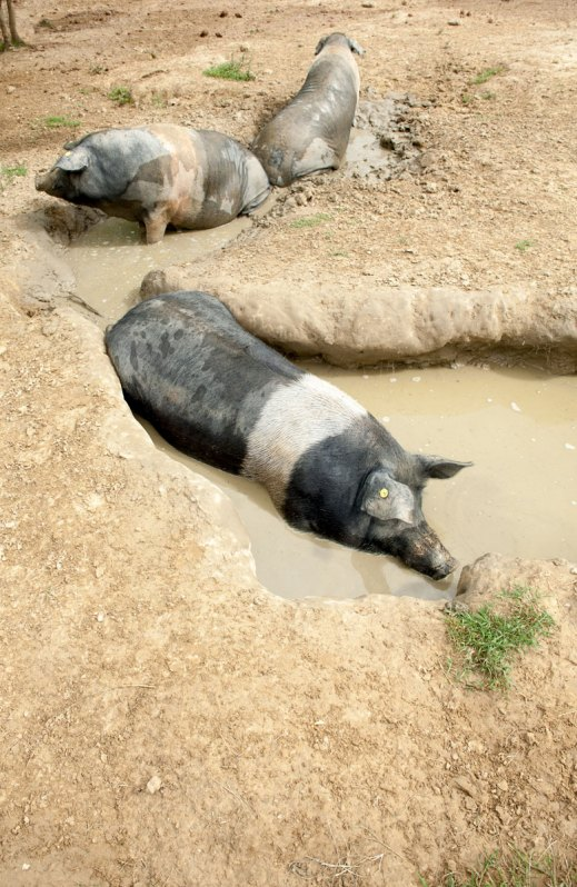 Ciro a bagno