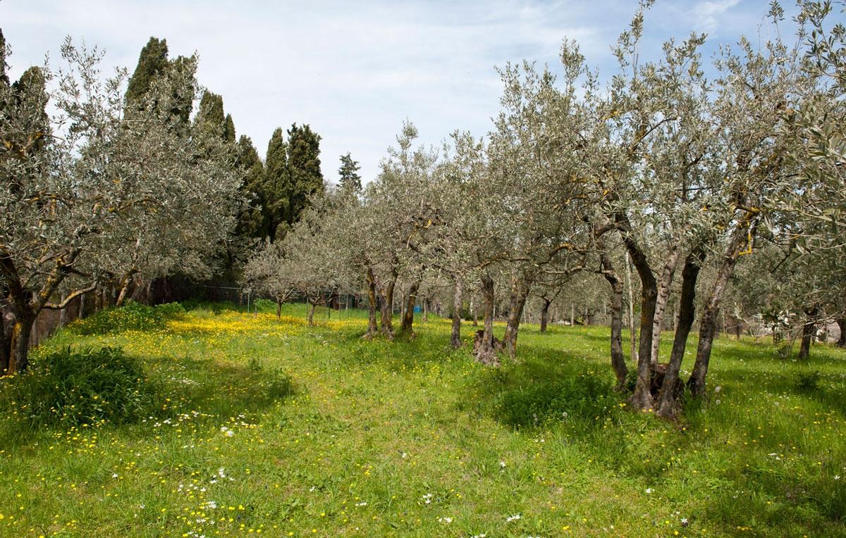 Passeggiata tra gli olivi