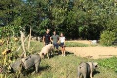 Turisti in fattoria